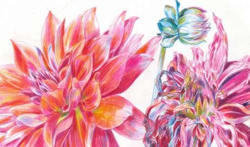 Botanische Porträts mit Farbstiften locker und lebendig zeichnen